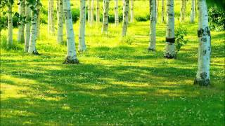 """【癒しの音】森を吹き抜ける風と鳥のさえずり""""Quiet Forest Sound Meditation"""" screenshot 5"""