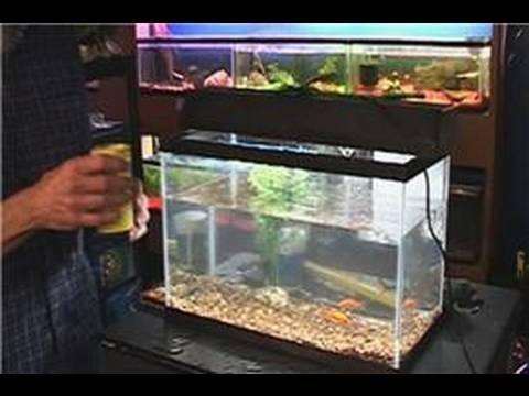 Fish Tank Maintenance : Putting Food in Fish Tanks