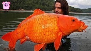 World's Largest Animals Alive Today - SlappedHamTV