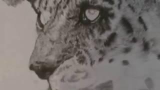Рисуем барса карандашом поэтапно. (часть 2). Как рисовать животных. Уроки рисования