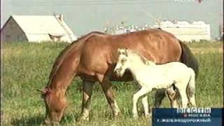Вести Москва  конный клуб г.Железнодорожный