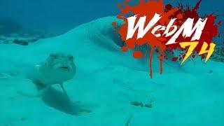Dank WebM Compilation 74