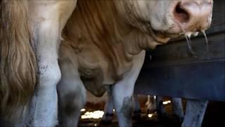 Journée de contrôle des camions d'animaux en période de canicule