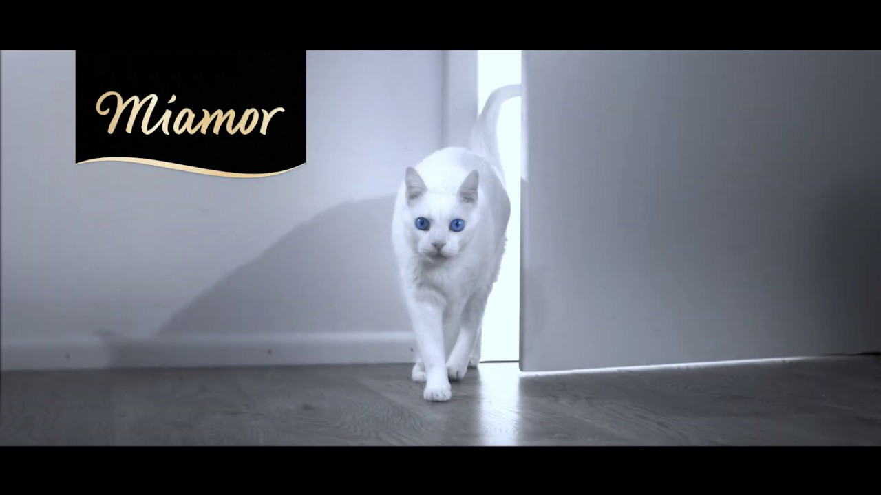 Miamor Tv Spot Youtube