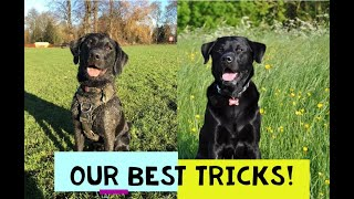 best tricks entry video for Erin's dog show!