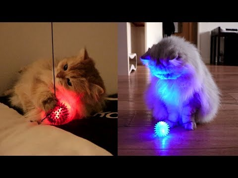 GLOW IN THE DARK - Cat Vlog #2 - Smoothie & Milkshake