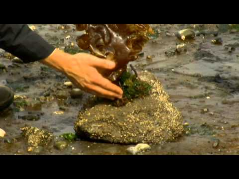 Turning Seaweed Into Biofuel - Shaw TV Victoria