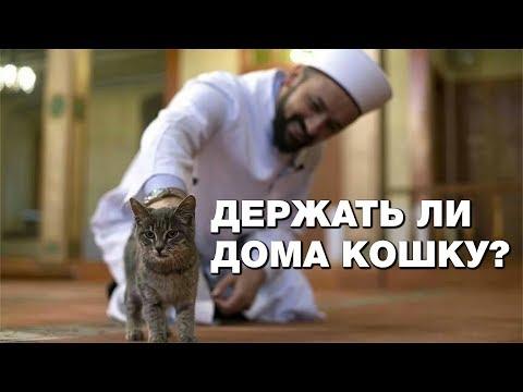 Нужно ли мусульманину держать дома кошку?