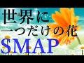世界に一つだけの花/スマップ 歌詞付き💎高音質フル🎧Sekai ni Hitotsu dake no Hana🌷SMAP(cover)