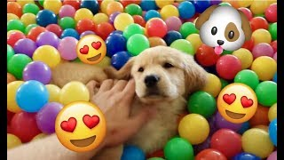 Sammie's First Ball Pit Trampoline Surprise! Funny Dog Playing in Snow! Golden Retriever Playtime