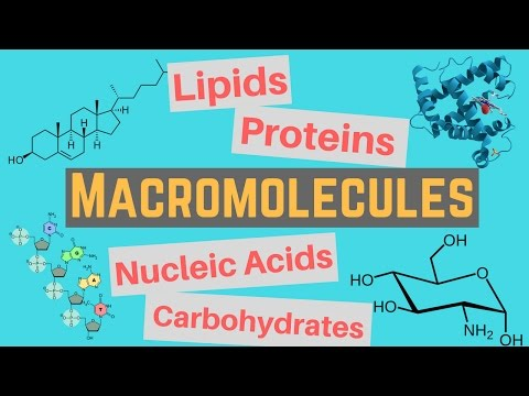 Macromolecules | Classes And Functions