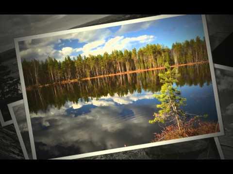 Лесной портал Карелии