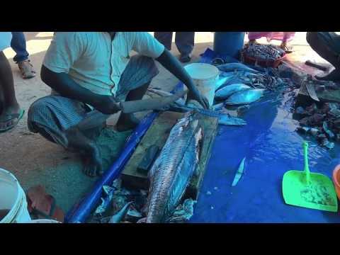 Fish cutting  in Kollam, Kerala