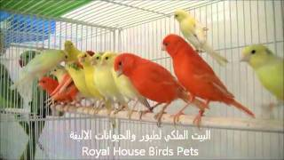 Royal House Birds