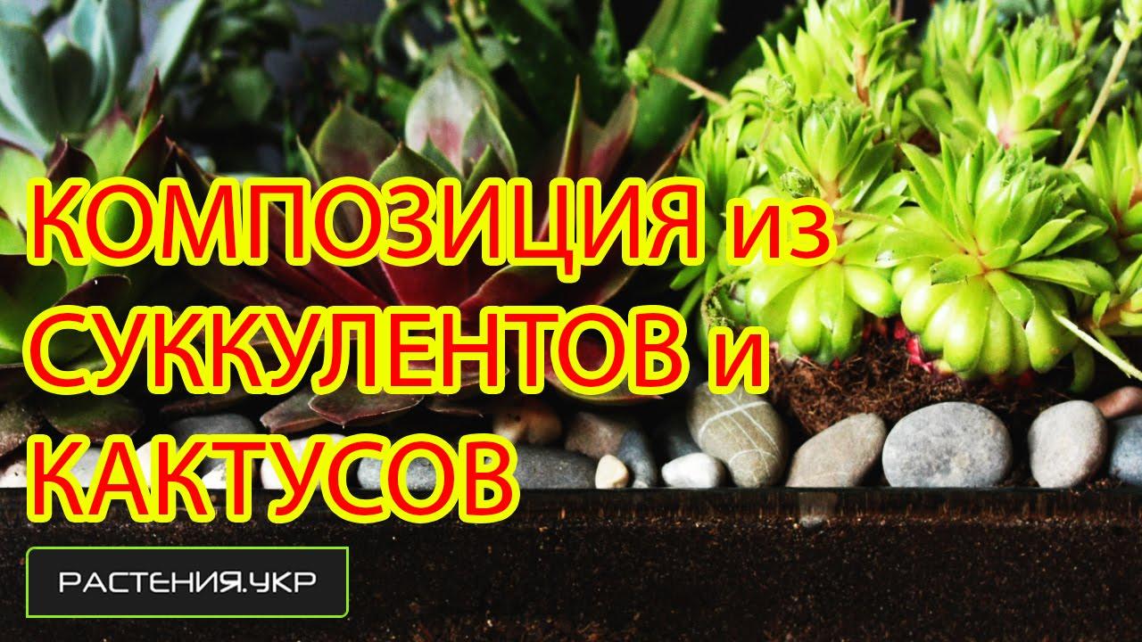Композиция из кактусов и суккулентов NEW (1 серия)