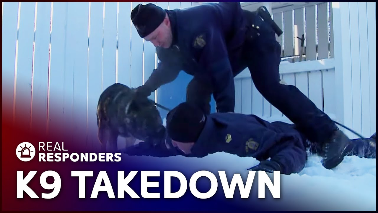 Learning To Stop An Armed Robbery | K9 Mounties | Real Responders