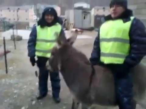 Замначальника патрульной полиции Днепра Логвиненко пострадал в ДТП - Цензор.НЕТ 6404