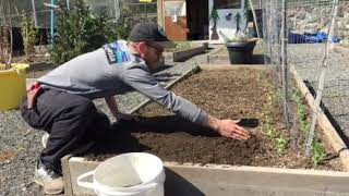 Preparing garden to plant lettuce