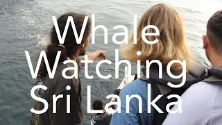 Whale Watching in Sri Lanka: The Search for a Blue Whale