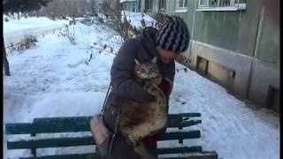 Новогоднее поздравление от супер толстого кота Степы!