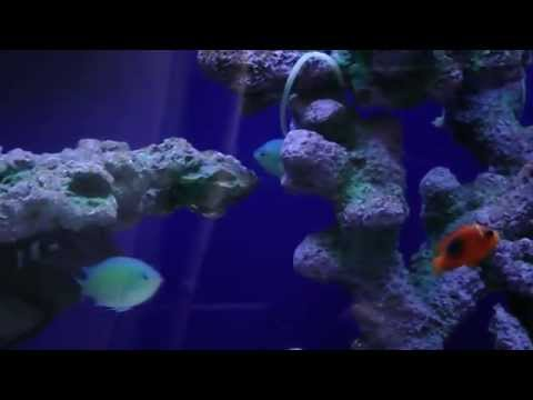 My 280L Marine Aquarium India Chennai