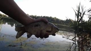 Открыли место для рыбалки в Херсонской области(Рыбалка в Херсонской области. Олешковский район, на реке Конка, возле Казачьи Лагеря. Моя рыбалка в августе..., 2016-08-07T15:39:39.000Z)