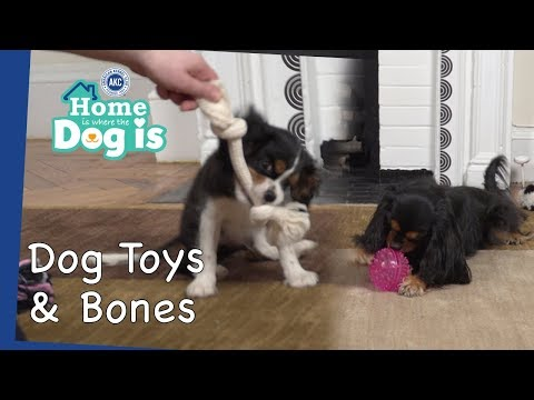 Episode 8 - Dog Toys and Bones