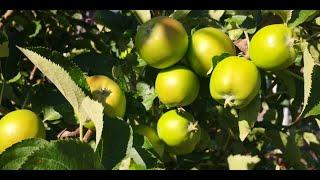Gulshan Main Phool Baghon Main Phal Aap Ke  گلشن میں پھول باغوں میں پھل آپ (Tayyeba Mubarka Rizwan)