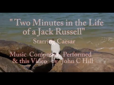 two-minutes-in-the-life-of-a-jack-russell
