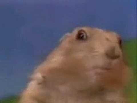 Le regard dramatique du chien de prairie - YouTube