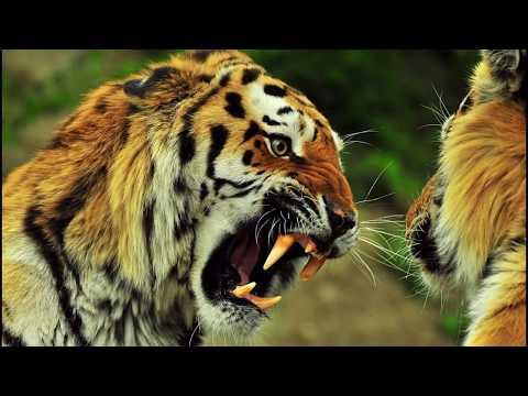 Вопрос: Какое животное самое сентиментальное?