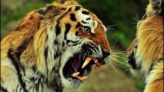 Самые сильные животные