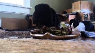 Time Lapse Bunnies Eating A Salad