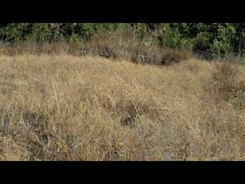 Ghillie Suit Hide And Seek Find Me YouTube