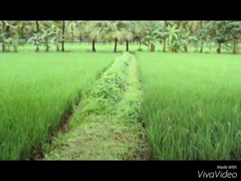 Agroteknologi.web.id Sumber Informasi Pertanian Indonesia