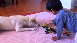 Thomas Train Set Meets Korean Jindo