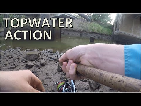 URBAN CREEK Fishing For Flathead & Bream, TOPWATER Action, South East Queensland