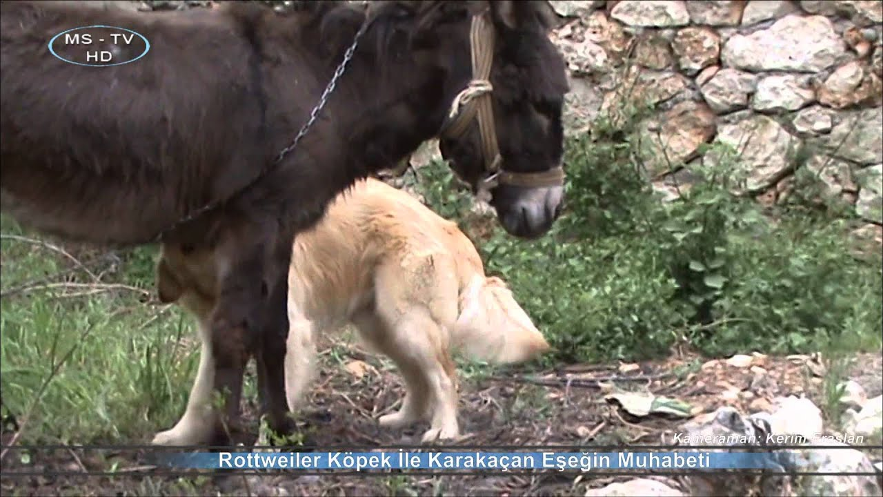 hayvanlı at porno