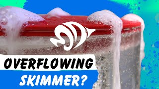How to Stop Your Protein Skimmer from Overflowing