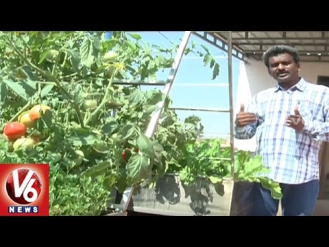 Success Story Of Organic Farmer Viswanatha Raju | Mahbubnagar | Sagubadi | V6 News