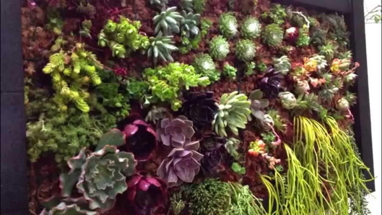 Como se desarrolla un cuadro vegetal youtube - Cuadro jardin vertical ...