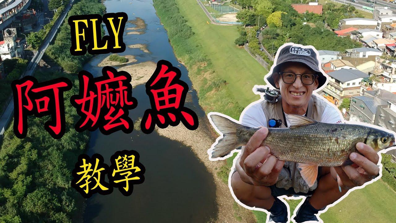 釣阿嬤魚很難?  FLY怎麼釣?  小小心得分享給您。諾諾哥第一次飛阿嬤魚就上手(台灣原生魚類圓吻鯝、五堵新長安橋)