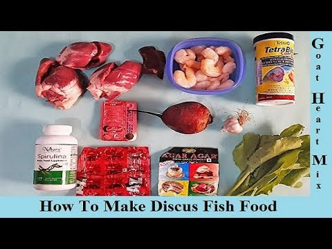 To Make Discus Fish Food || GHM || Goat Heart Mix Discus Fish Food