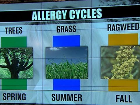 Climate change may aggravate allergies