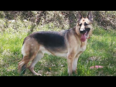 Fallout 4 Dogmeat Real Life Behind The Scenes Trailer