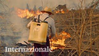 Il Brasile brucia e la colpa è spesso delle multinazionali
