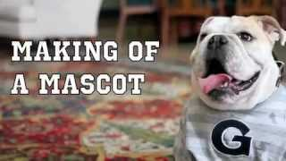 Making Of A Mascot: Georgetown's Jj The Bulldog