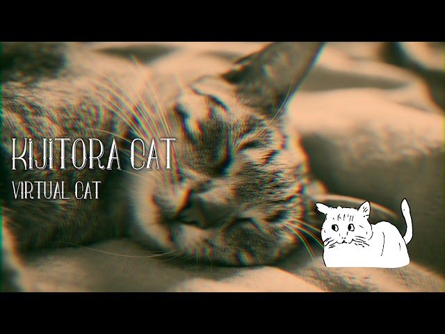 【VCDR-0002】Virtual Cat / Kijitora Cat