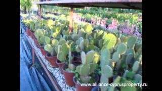 Садовый центр на Северном Кипре(Садовые центры расположены на всей территории Северного Кипра. Здесь Вы можете преобрести всё необходимое..., 2013-01-22T21:26:52.000Z)