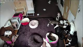 朝からのバイトが終わり猫家に着いてひと休憩の様子を見てください。 3分40秒位までは留守番の様子です。 R3.06.13